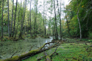 ÖUB Brandenburg: Naturnahes Moor, BR Schorfheide-Chorin, © R. Probst