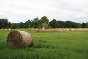 ÖUB-Brandenburg: Grasland im BR Spreewald, © T. Lüdicke