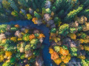 Rominter Heide, © D. Stein