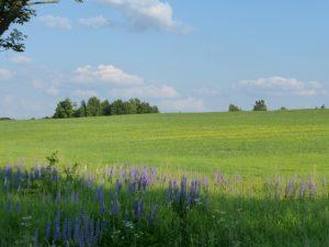 Rominter Heide, © C. Welscher
