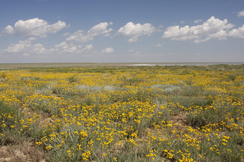 Semi-shrub steppe (Lake Elton Biosphere Reserve - Russian Federation), © UNESCO, A.Popov