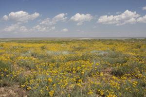 Semi-shrub steppe (Lake Elton Biosphere Reserve - Russian Federation), © UNESCO, A.Popov