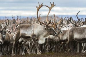 Vindelälven-Juhtatdahka Biosphere Reserve - Sweden, © UNESCO, Ola Jennersten, WWF